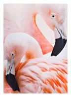 molo Badeanzug NIKA mit UV-Schutz 50+, Farbe: APRICOT (Bild 1)